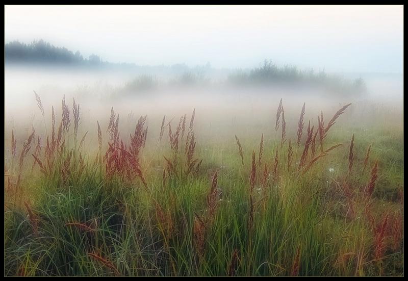 Фильм Туман