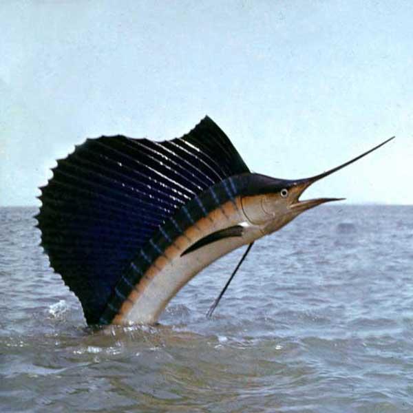 шхуна для ловли кальмаров