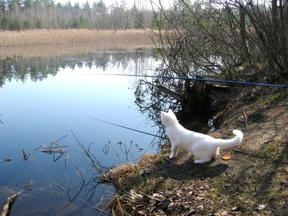 не ходите на рыбалку с петей