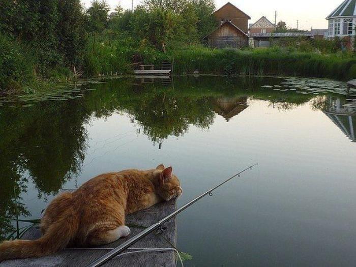 рыбаки и рыбка утро после рыбалки