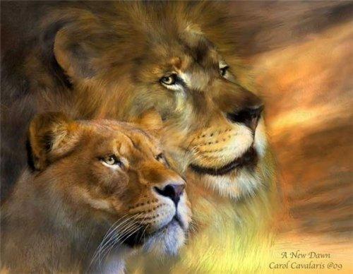Какая пара лев и львица