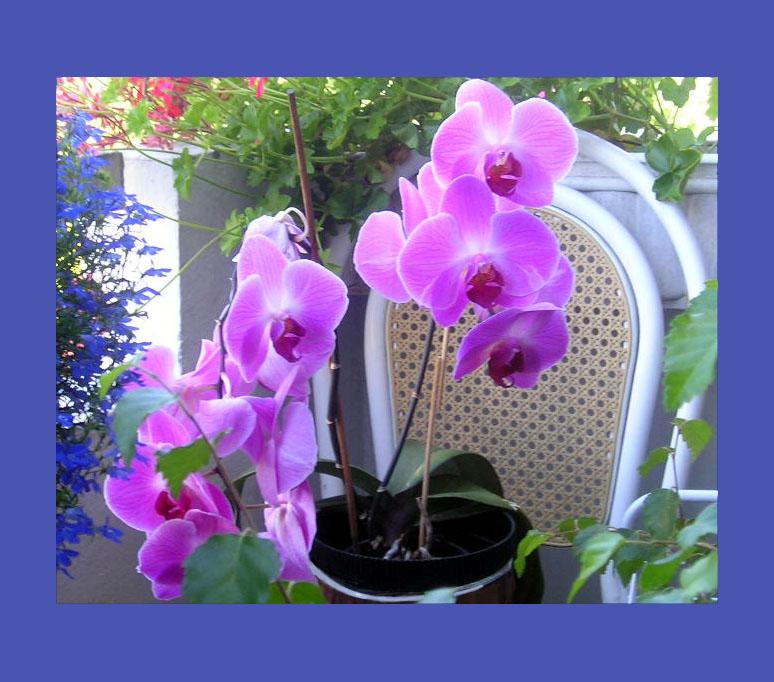 Красивые открытки с орхидеей
