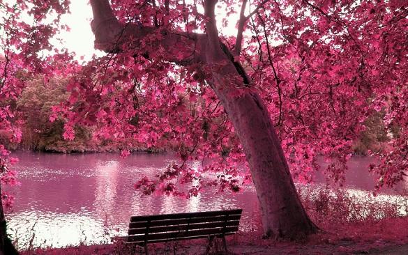 Картинки по запросу мир в розовых очках