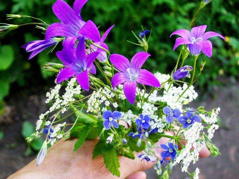 Стихи лесные цветы