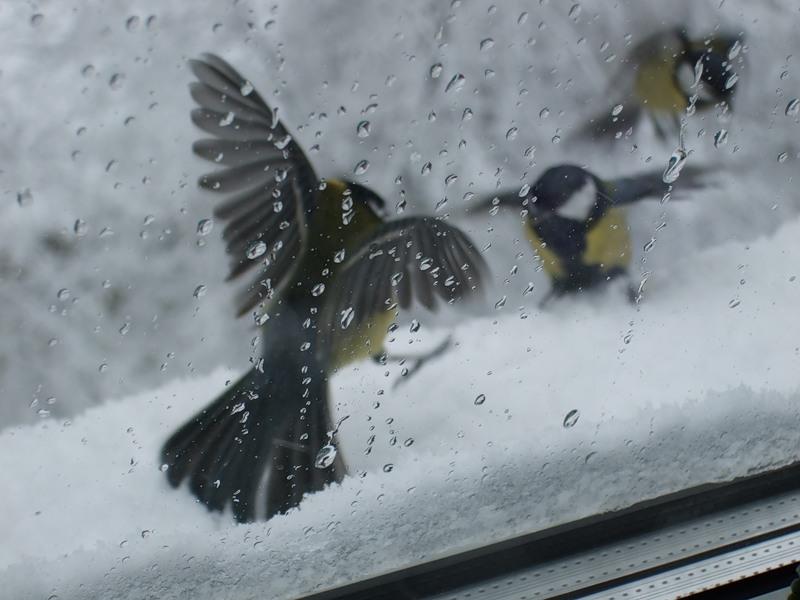 отзывы, сонник окно стая птиц бились добрые люди