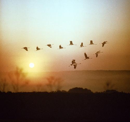 Малиновка фото птицы зарянка ольшанка