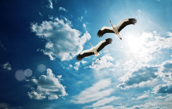 Pretty Bird Flying in The Sky Pretty Bird Flying in The Sky