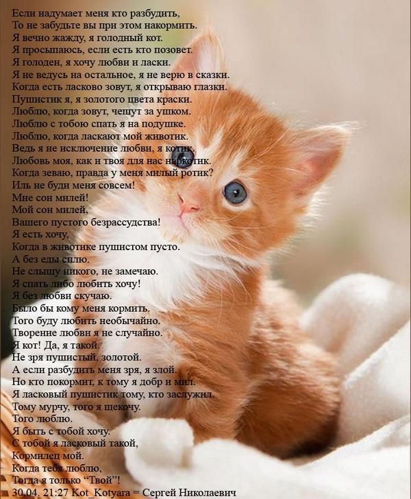 Люблю кошку стих