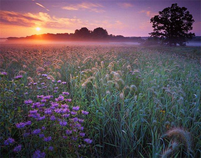 Поле милое поле стих
