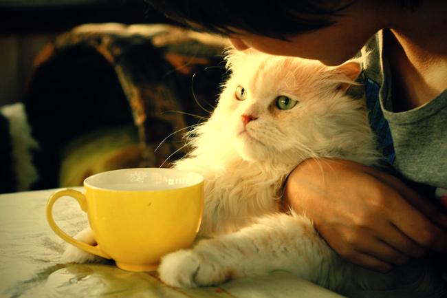 Картинки кот с чаем
