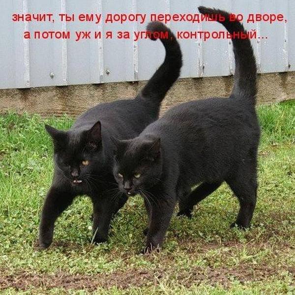 сделать правильный черная кошка обошла вокруг примета поступил