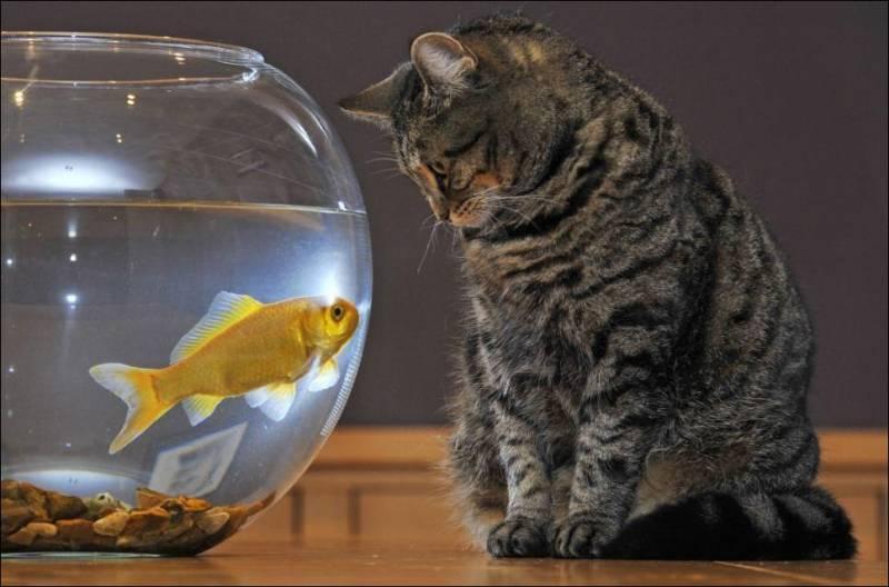 котик ловит рибку