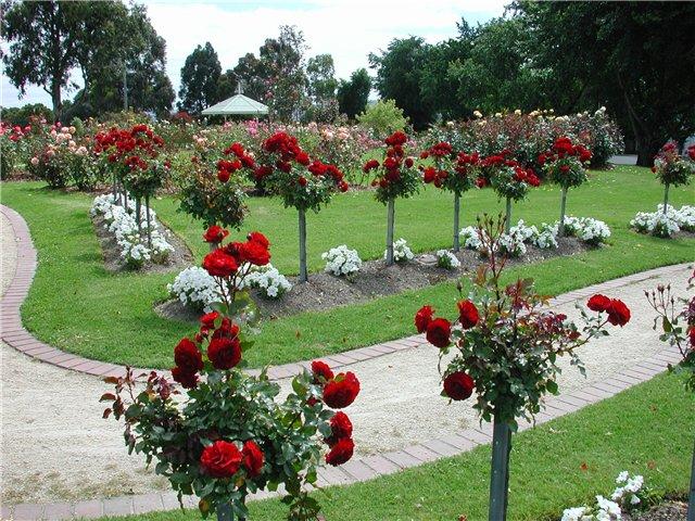 Растения в саду дизайн