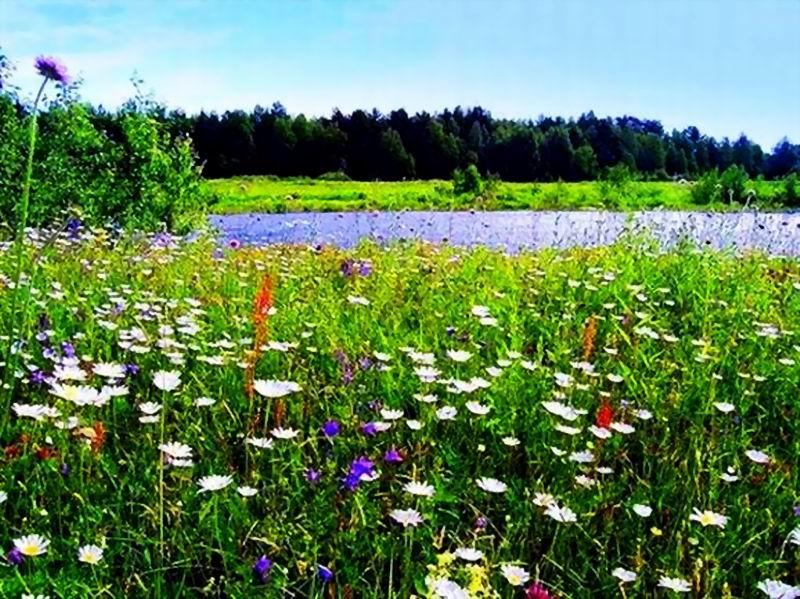 Цветы и горшечные растения  Купить цветы оптом в Минске