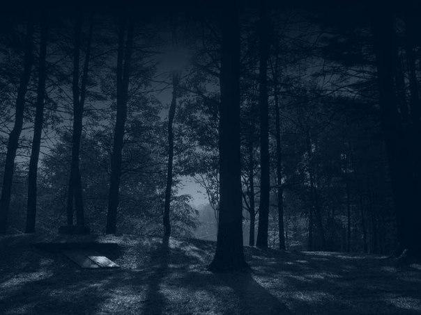 фото ночного леса