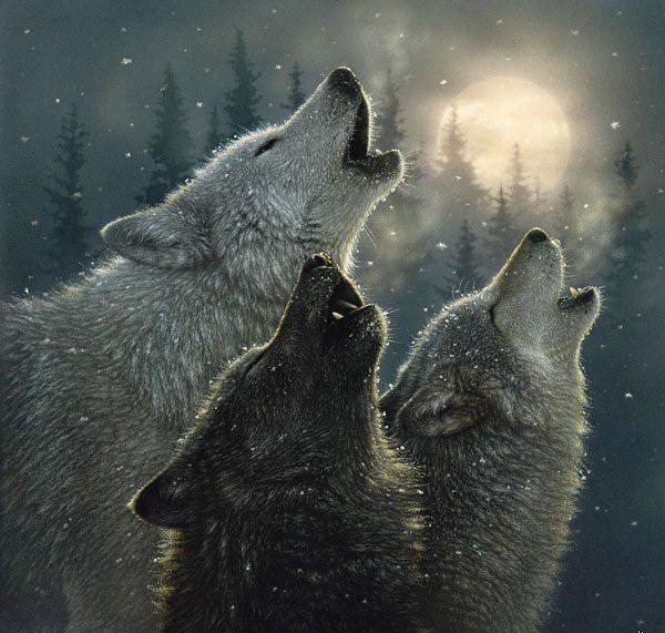 волк на луну воет картинка