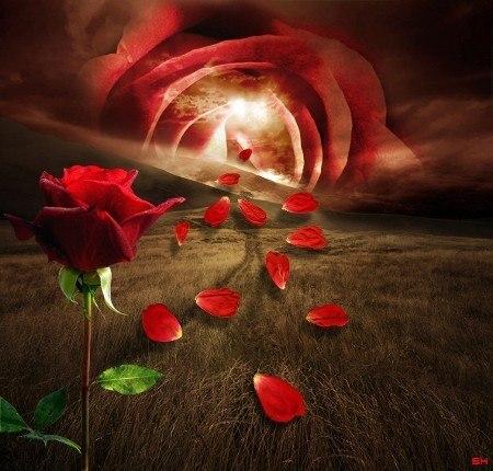 любви цветок фото