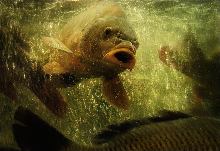 как держать пойманную рыбу в воде