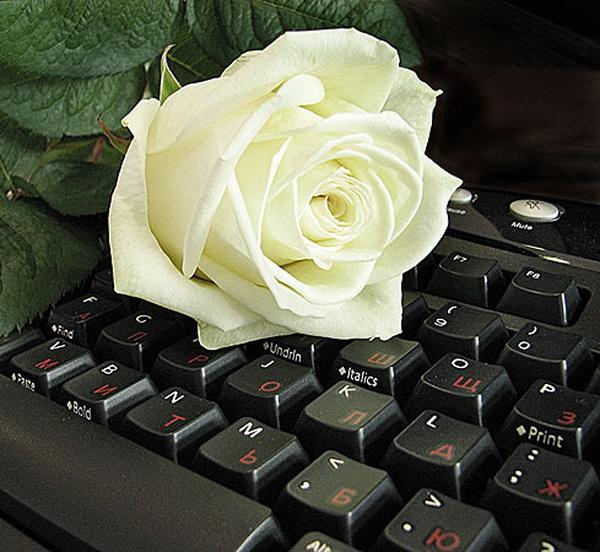 Сделать, фото белые розы гифы с надписью для тебя