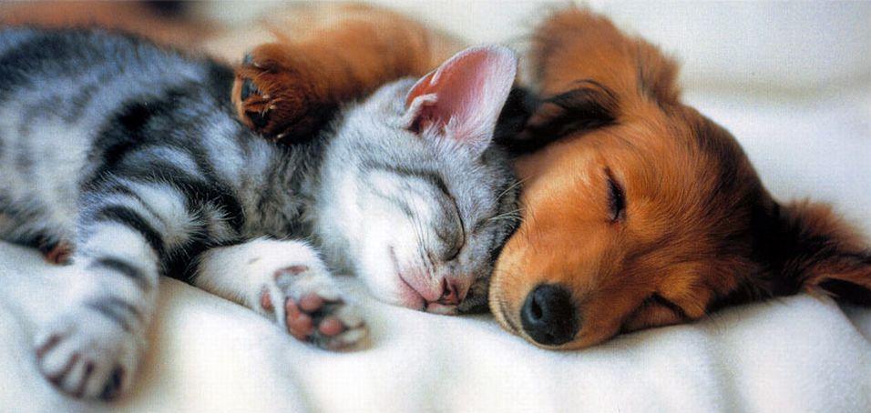 Хочешь крепко спать – заведи домашнее животное