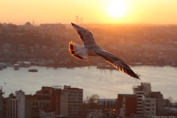 фотографией она птицы над городом этого