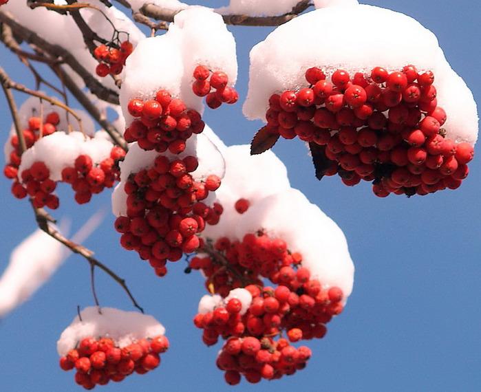 Цветы зимние