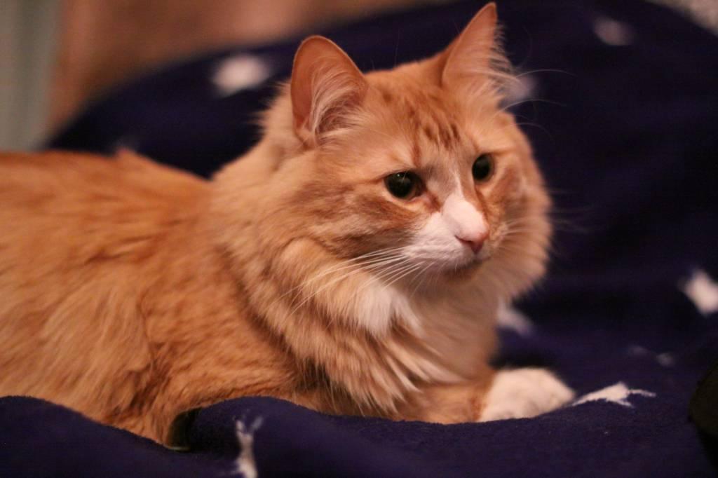 Пушистый кот стих