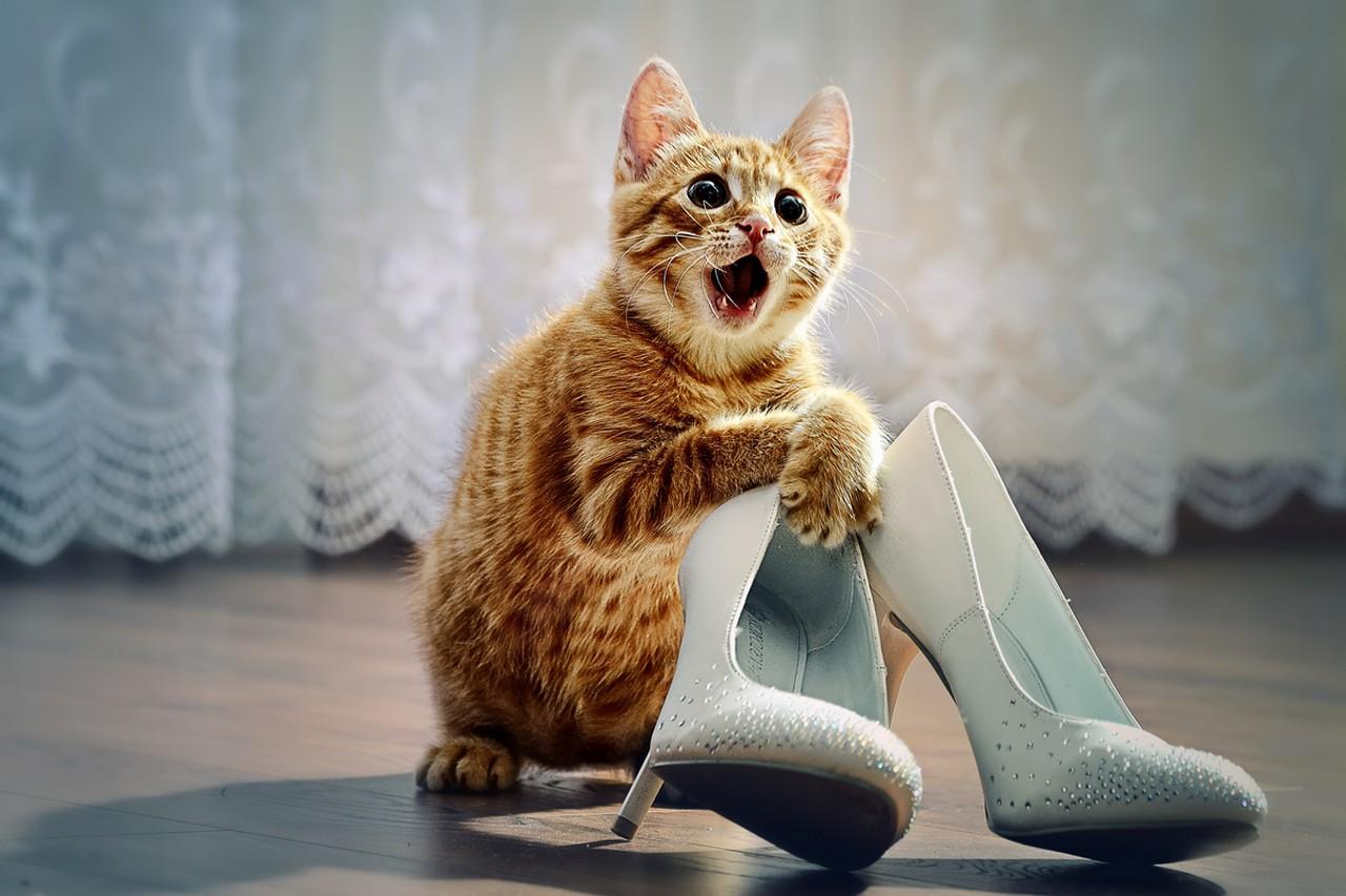 Приколы про кошек картинки новые