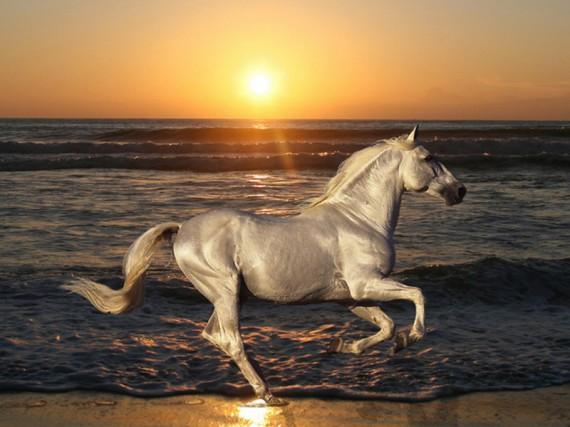 фото лошадей на заставку телефона № 20671 бесплатно