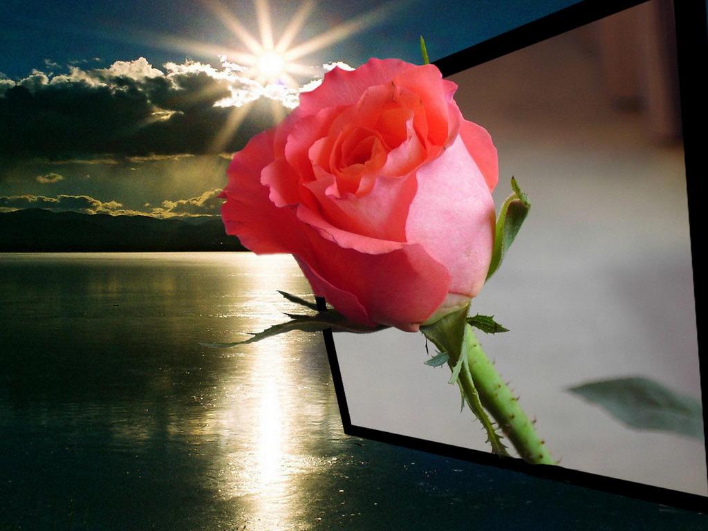 Красивые вечерние цветы для любимой женщины