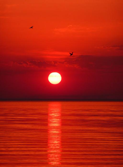 Цвет багряный фото