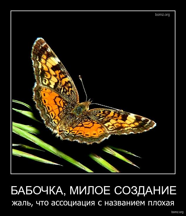 Статусы про бабочек сексуальные