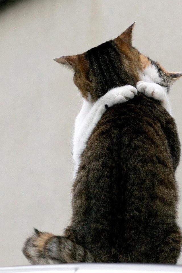 Днем, картинки котенок скучает по своей кошечке