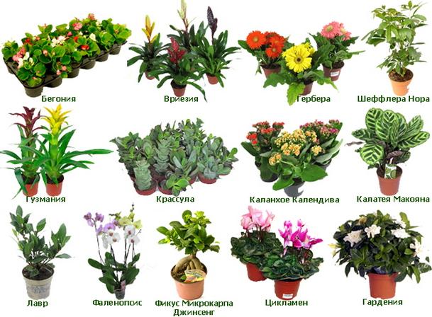 фото цветы крыма с названием цветка