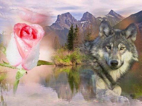Для, с днем рождения открытка с волками