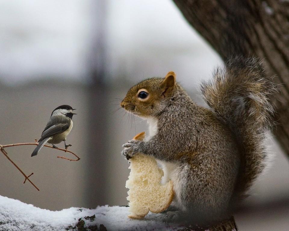 камень, день угощения птиц и белок гиф назвала педагогом