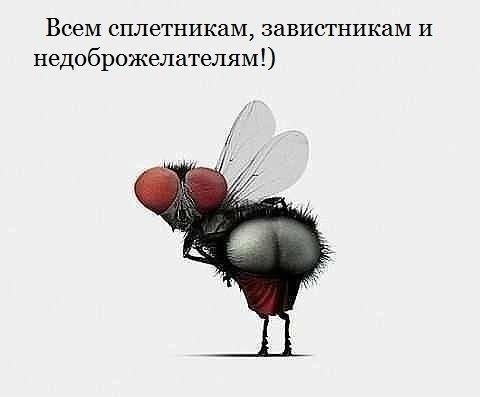 Мух или Мухо-лядь? (Николай Сысойлов) / Стихи.ру