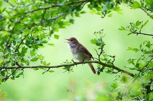 девочки утренние голоса птиц ивсей природы приятное