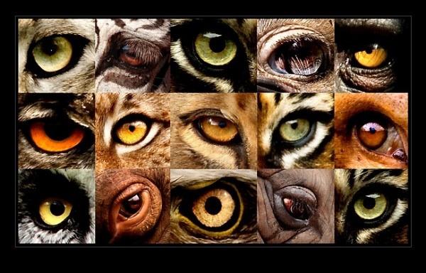 Глаза животных в магии