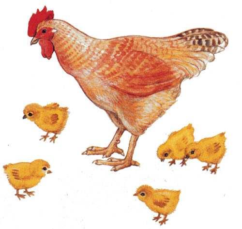 Картинки колоса пшеницы для детей