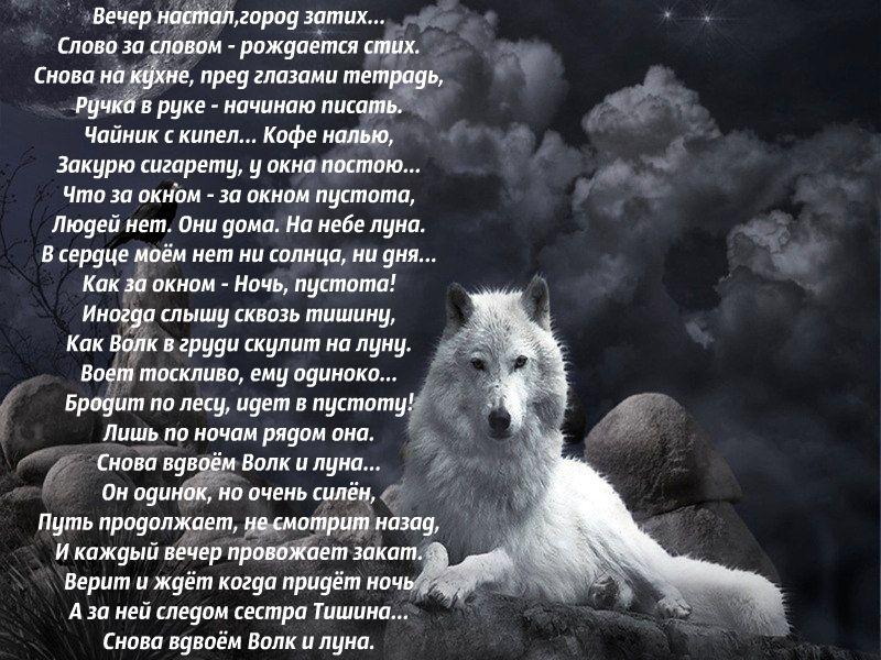 большое фото с волком и стихами как предыдущем