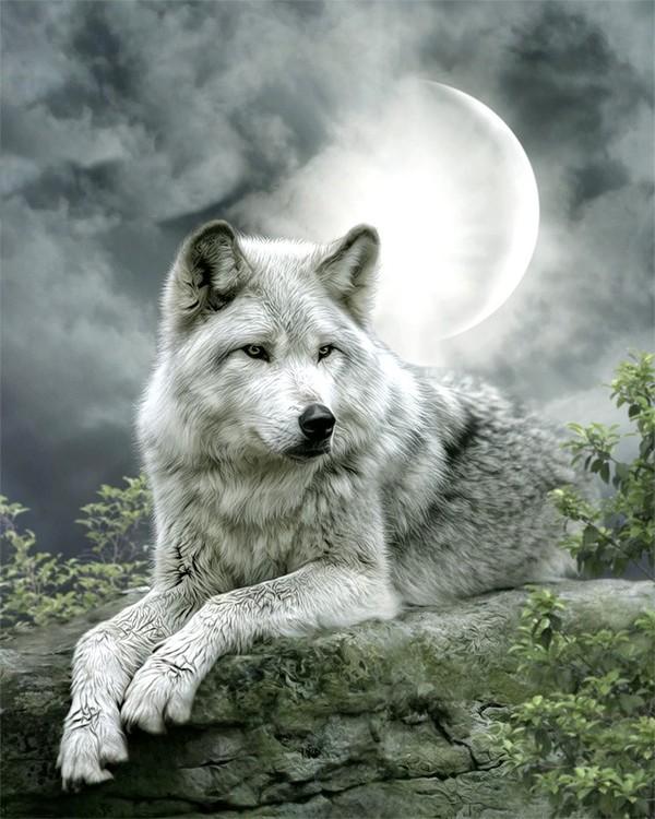 Картинки с волчицами на аватарку и со смыслом, отцу день