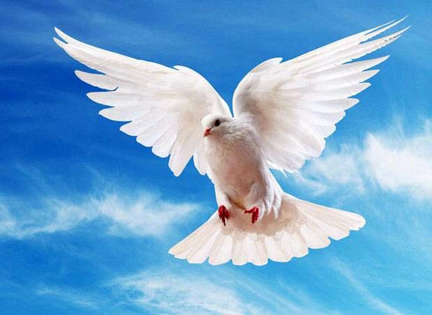 Фотография на тему Силуэт хищной птицы на белом фоне