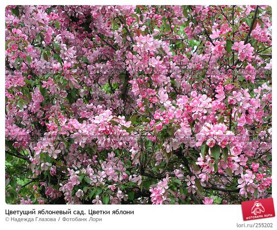 Фото кустарник с розовыми цветами