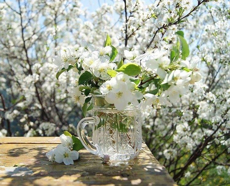 белый день весна