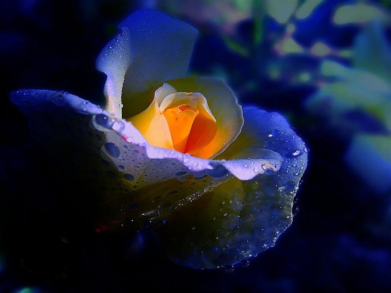 спальня анимация фото цветок любви работы находятся где-то