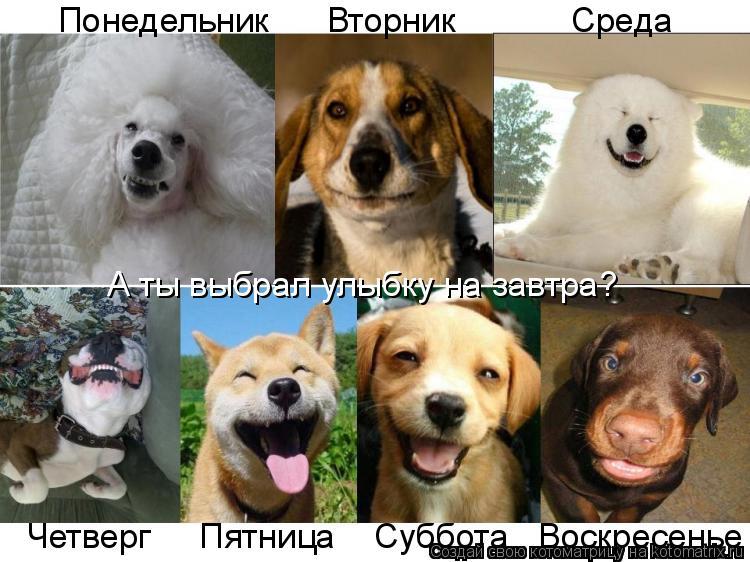 картинка собака по дням недели чем значим