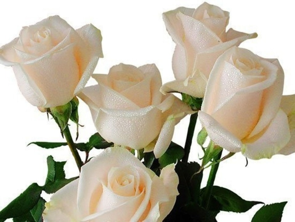 Открытки с белыми розами анимация, юбилеем светлане лет
