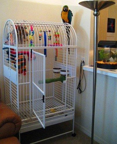 Клетка для попугая своими руками в домашних условиях