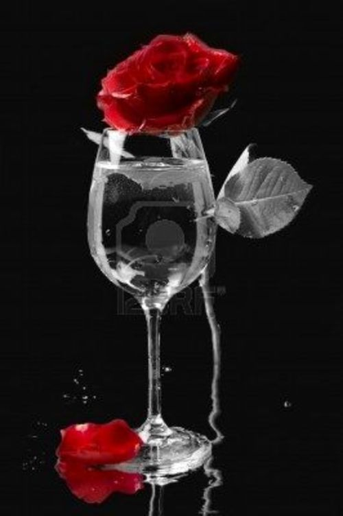роза на чёрном фоне картинки